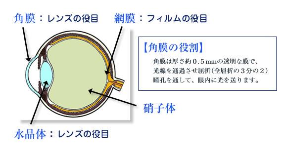 目の構造と屈折異常について | ...